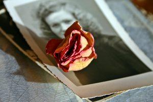 getrocknete Rose auf Bild